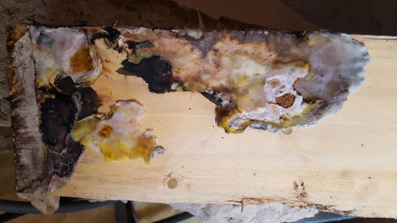 gauthier-althis-moissure-champignon-merule-traitement-charpente-bois-3