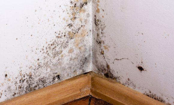 humidité des murs traitement infiltration assèchement